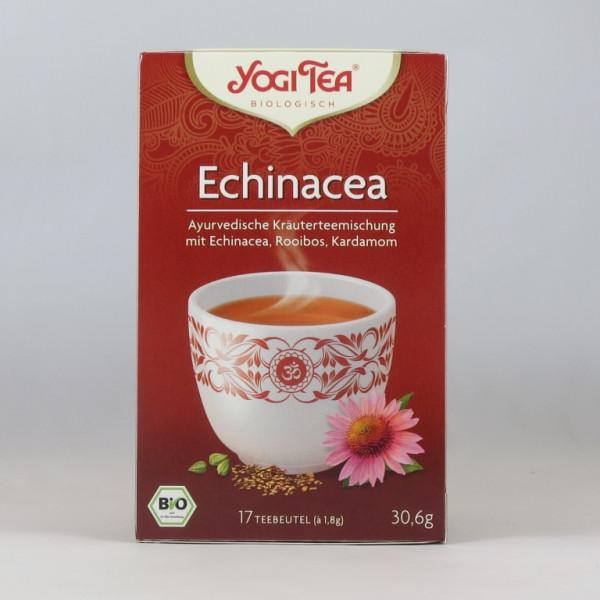 Yogi Echinacea