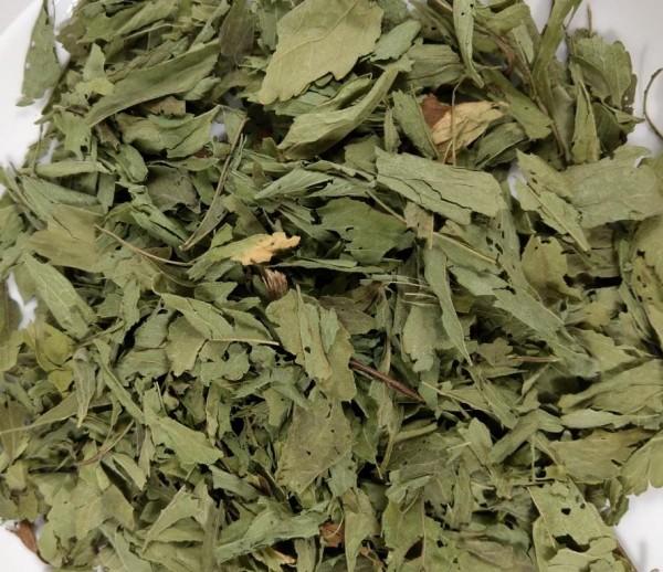 Stevia Blätter aus biologischem Anbau