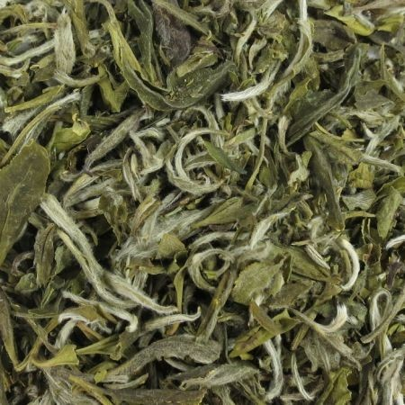 White Tea Snow Buds Special Grade